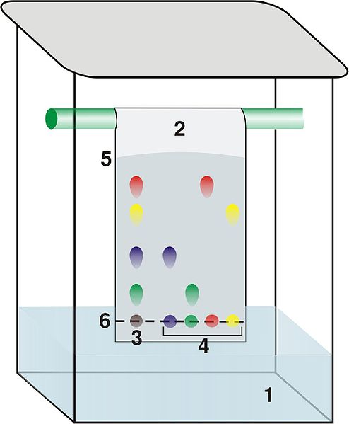 application of paper chromatography in pharmacy